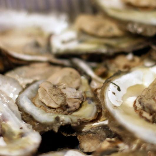City Center Oyster Roast